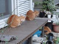 090101-cats.jpg